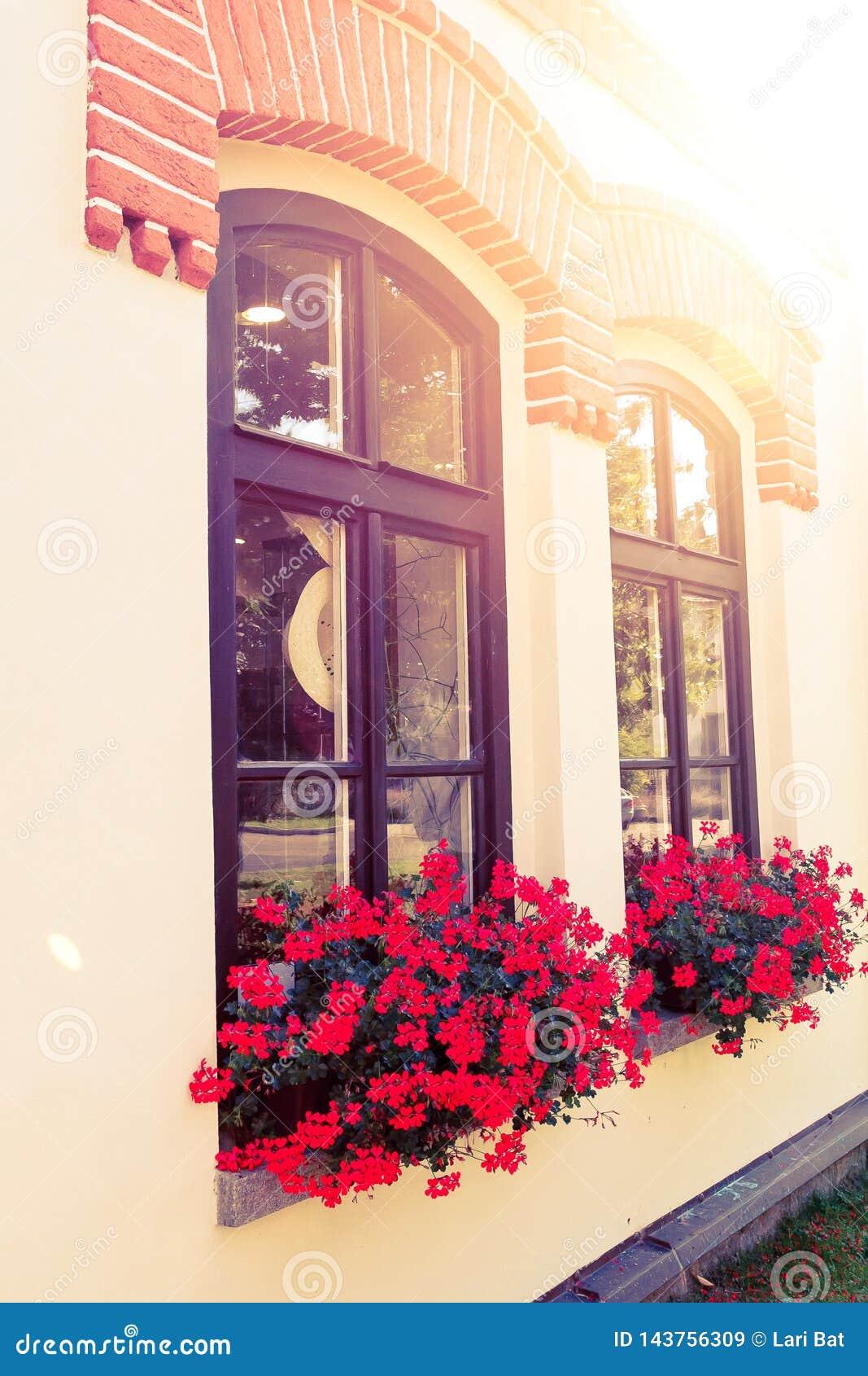 Röda blommor i askar på fönsterbrädan