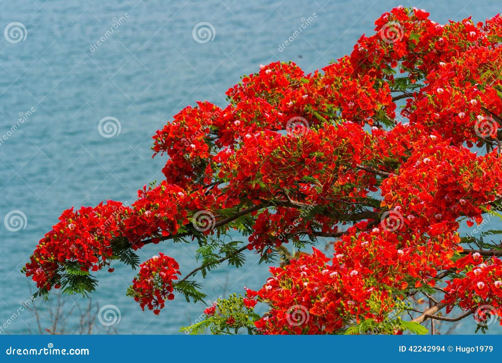 röda blommor bilder