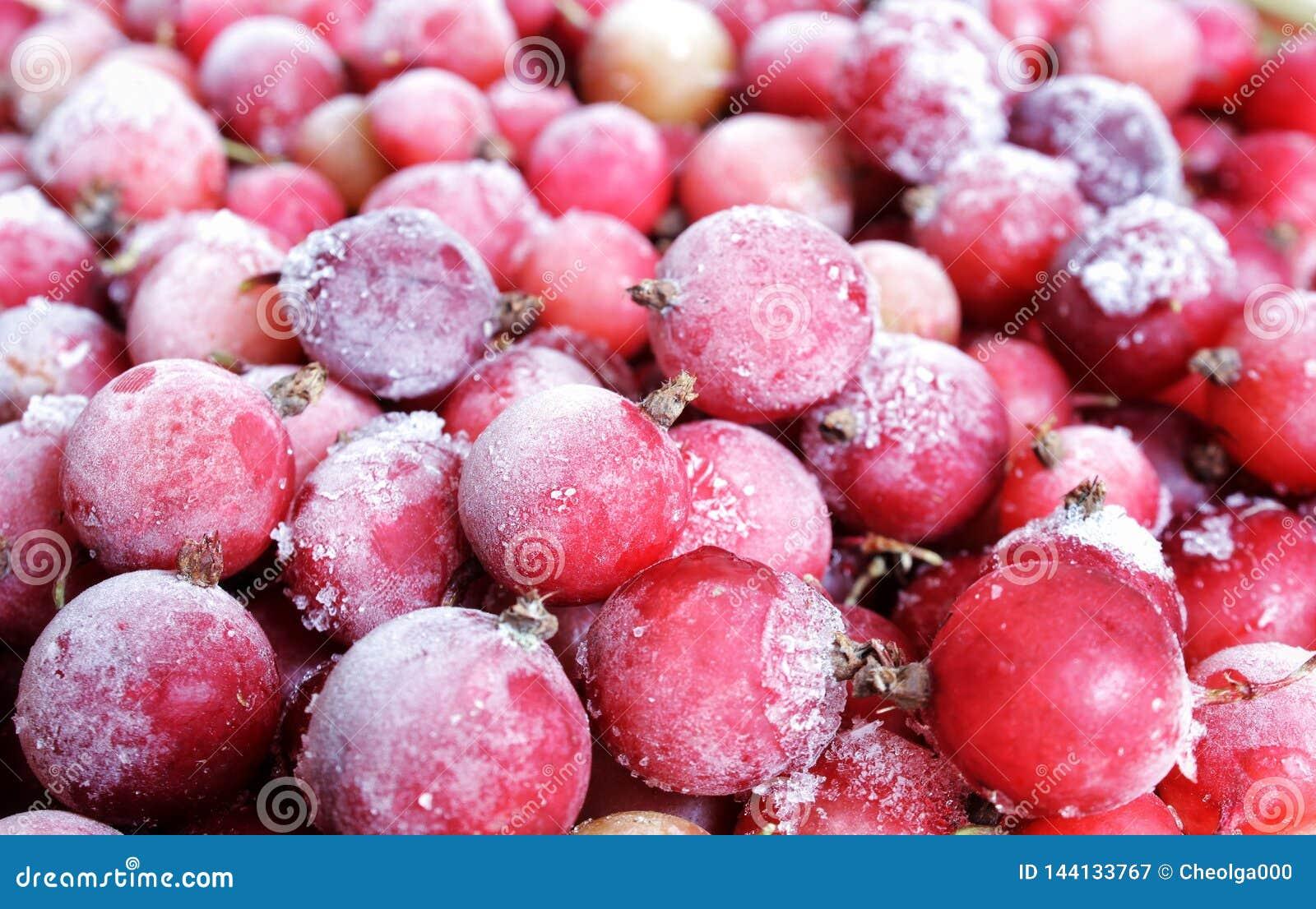 Röda djupfrysta bär som täckas med is och is, röda vinbär, lingon, tranbär, vitaminer i vinter ovanför sikt Makro