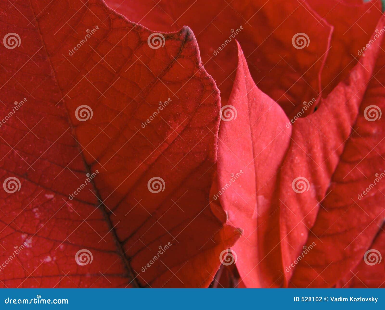 Röda leafes