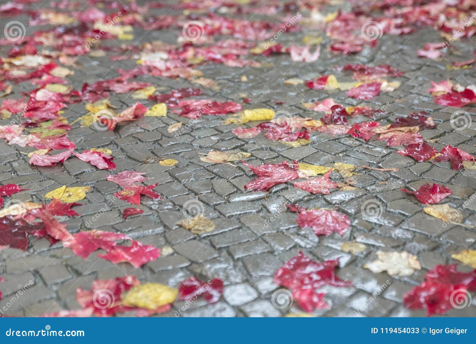 Röda och gula höstsidor ligger beautifully på en våt trottoar I