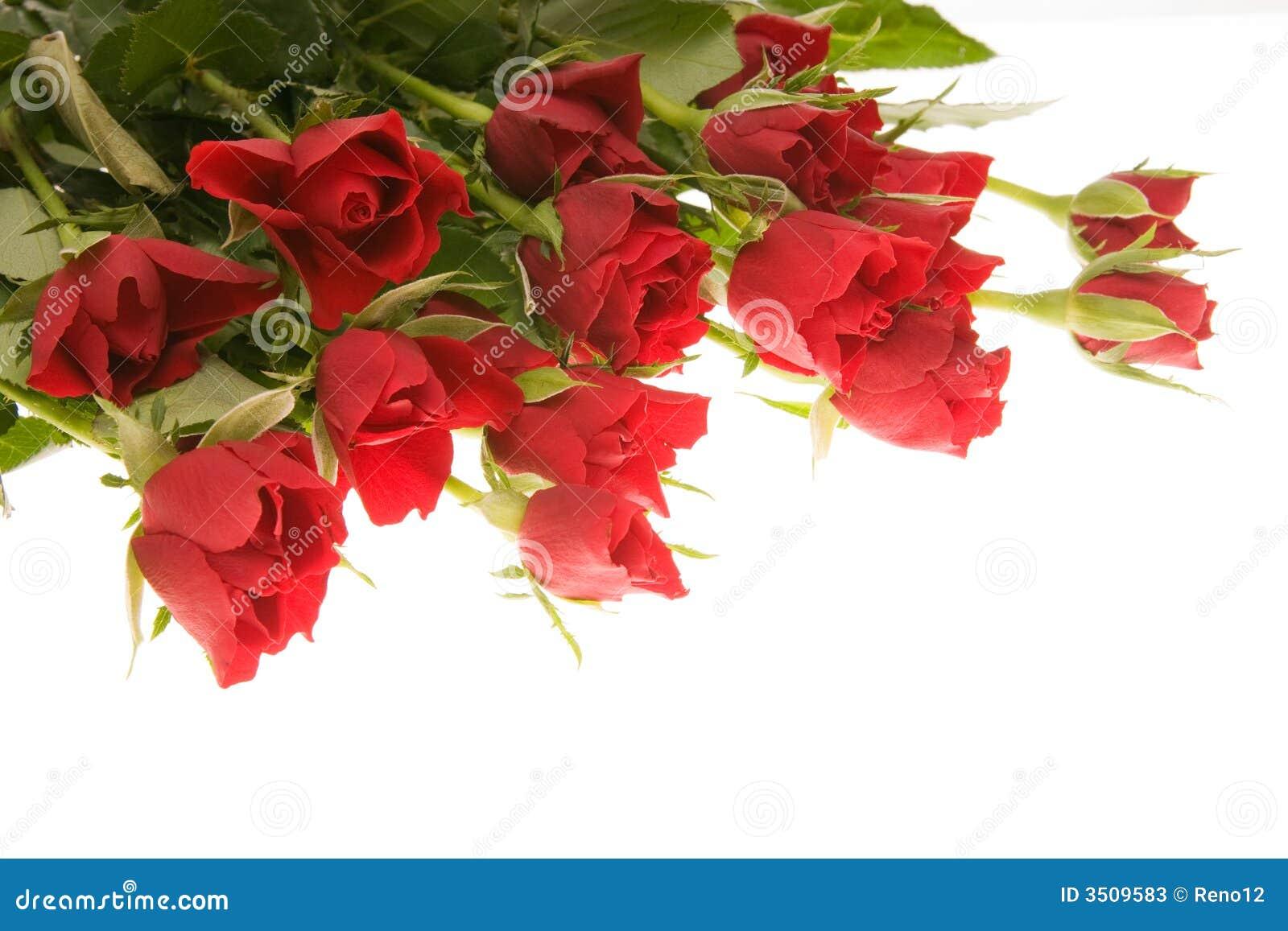 Röda ro