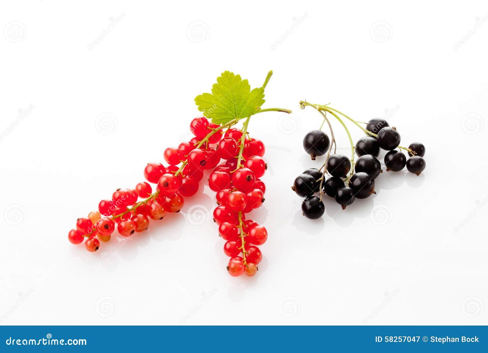 Röda svarta vinbär