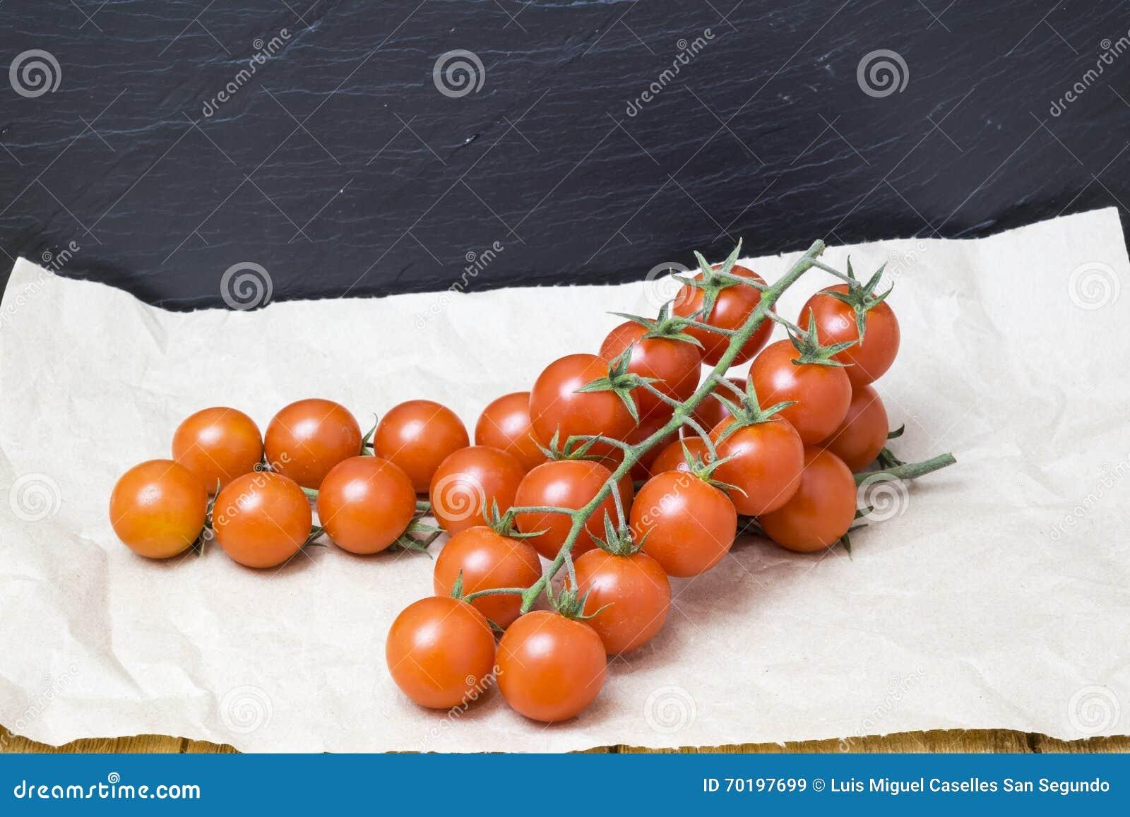 Röda tomater på filial