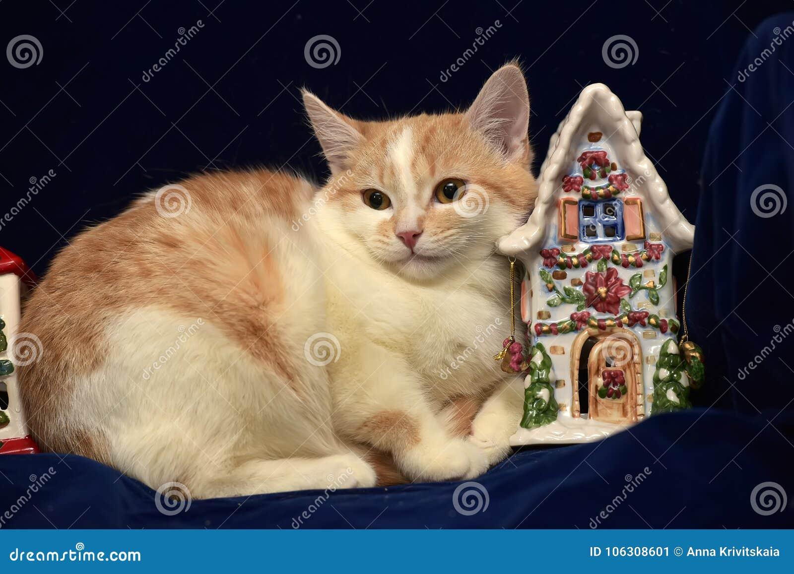 Rödhårig man med den vita ledsna hemlösa kattungen och jul