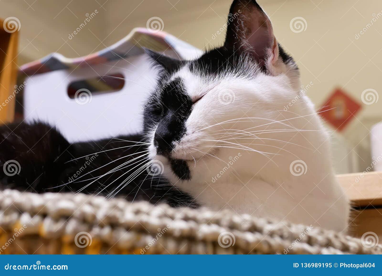 Rörelse av strimmig kattkatten som är sömnig på hennes säng hemma