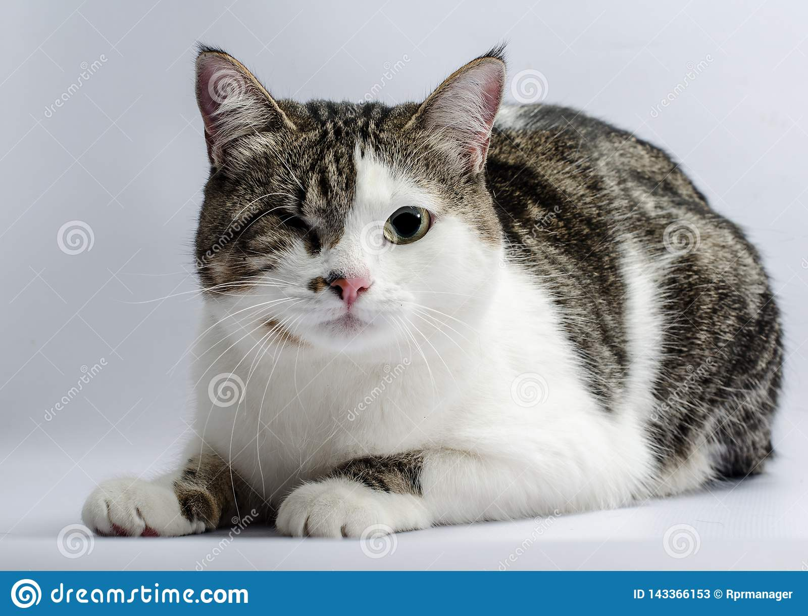 Rörelsehindrad djurstående av en enögd katt