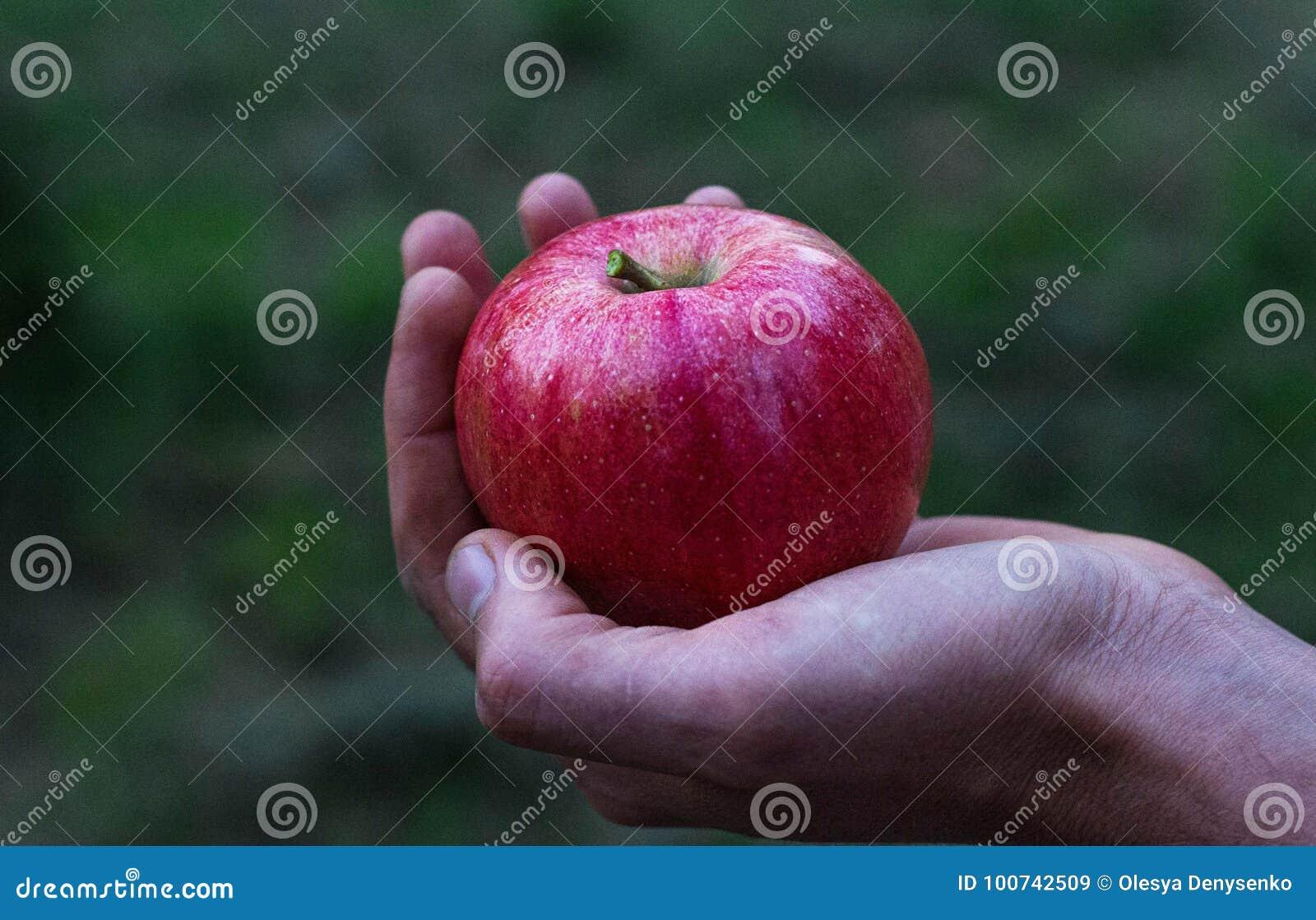 Rött äpple på handen