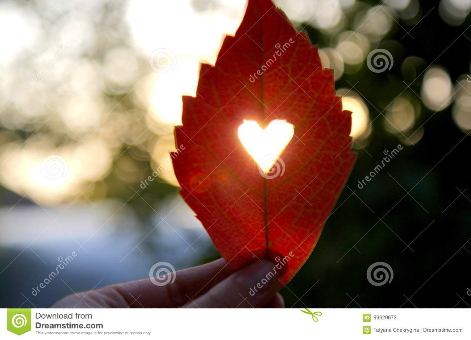 Rött blad för höst med klippt hjärta i en hand
