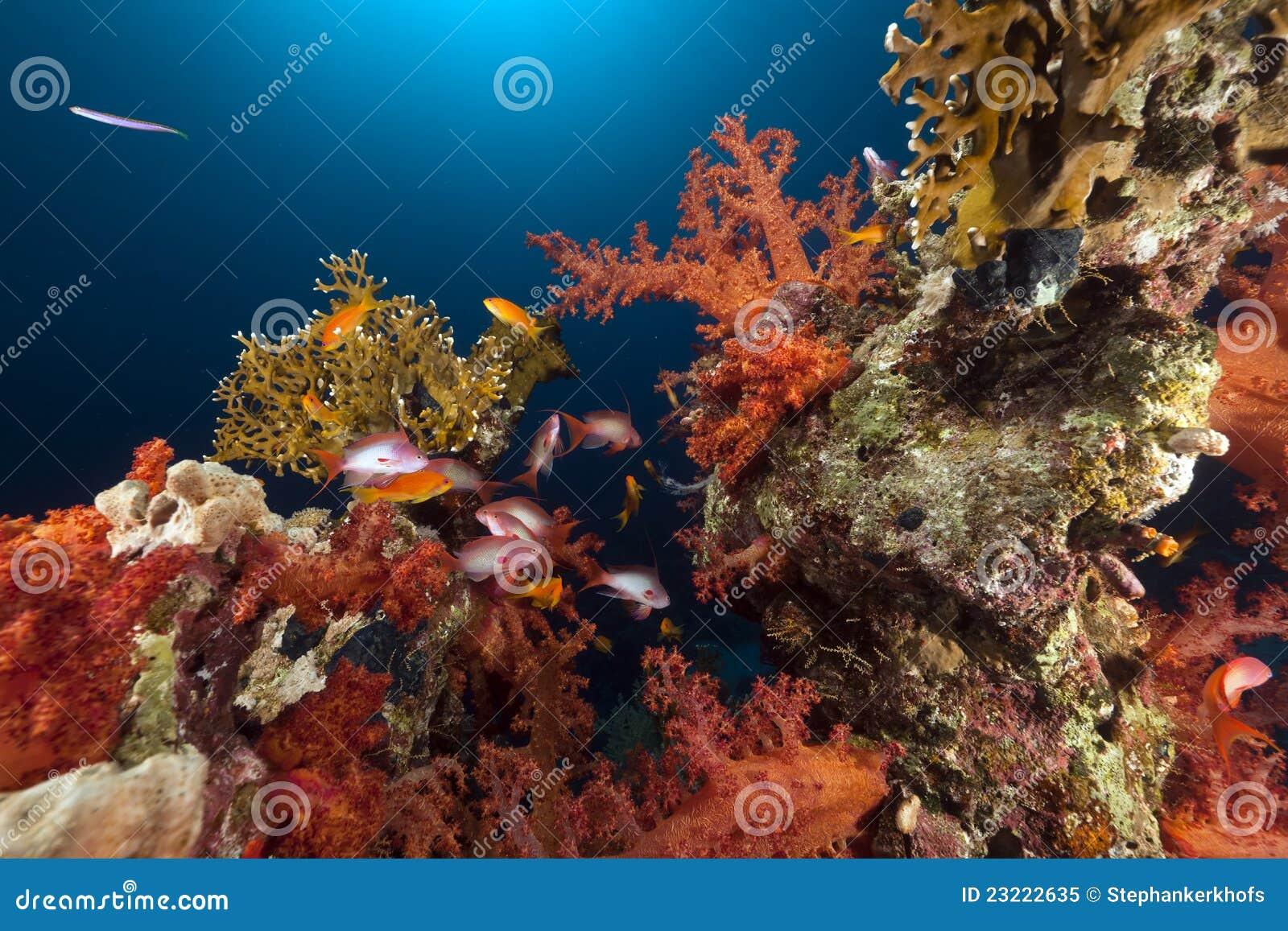 Rött tropiskt revhav för fisk