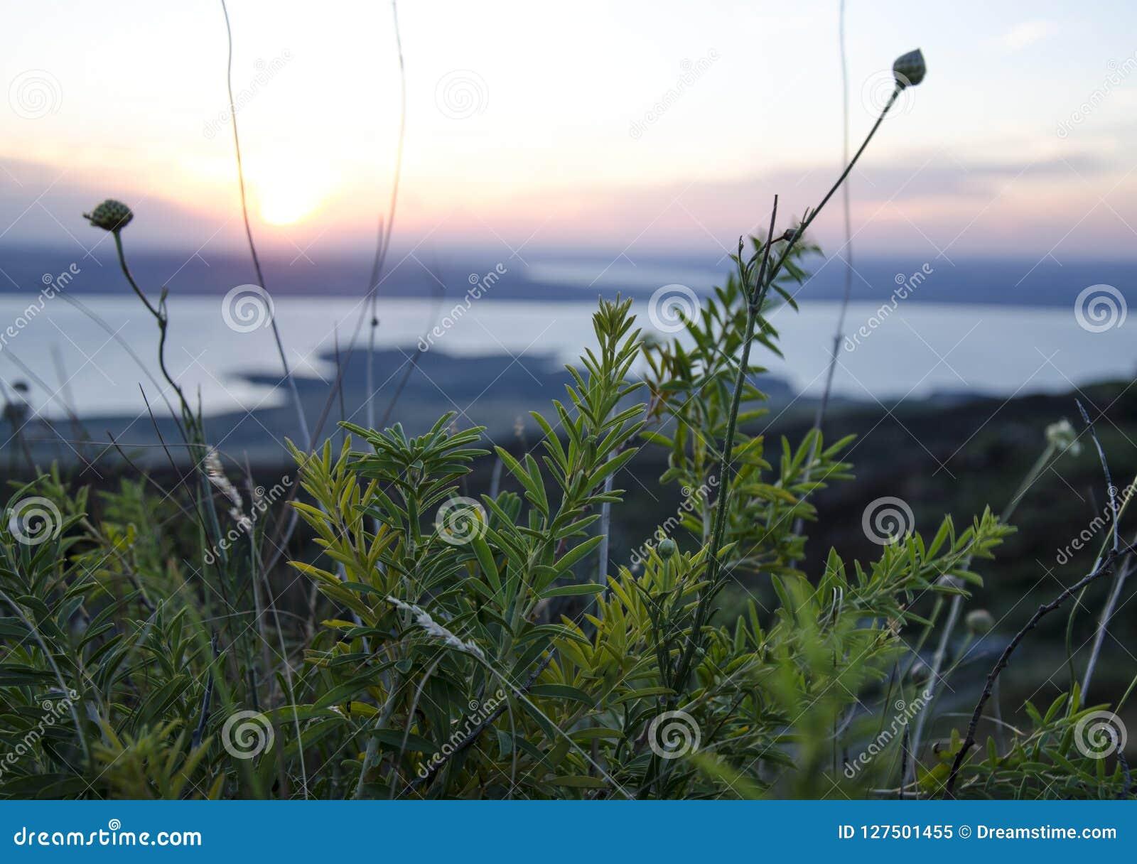 Rússia Por do sol do verão na natureza Por do sol fantástico sobre um lago perto de um prado verde