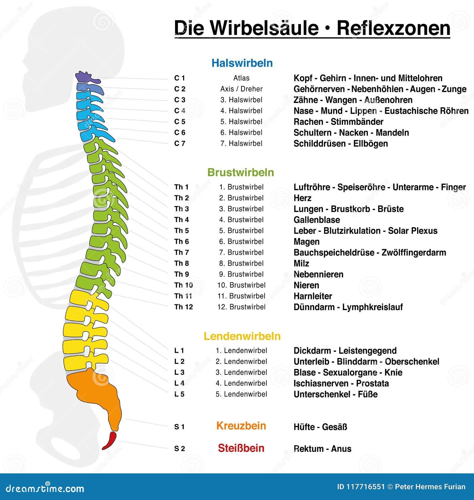 Wunderbar Bild Der Zunge Mit Geschmacksknospen Galerie - Physiologie ...