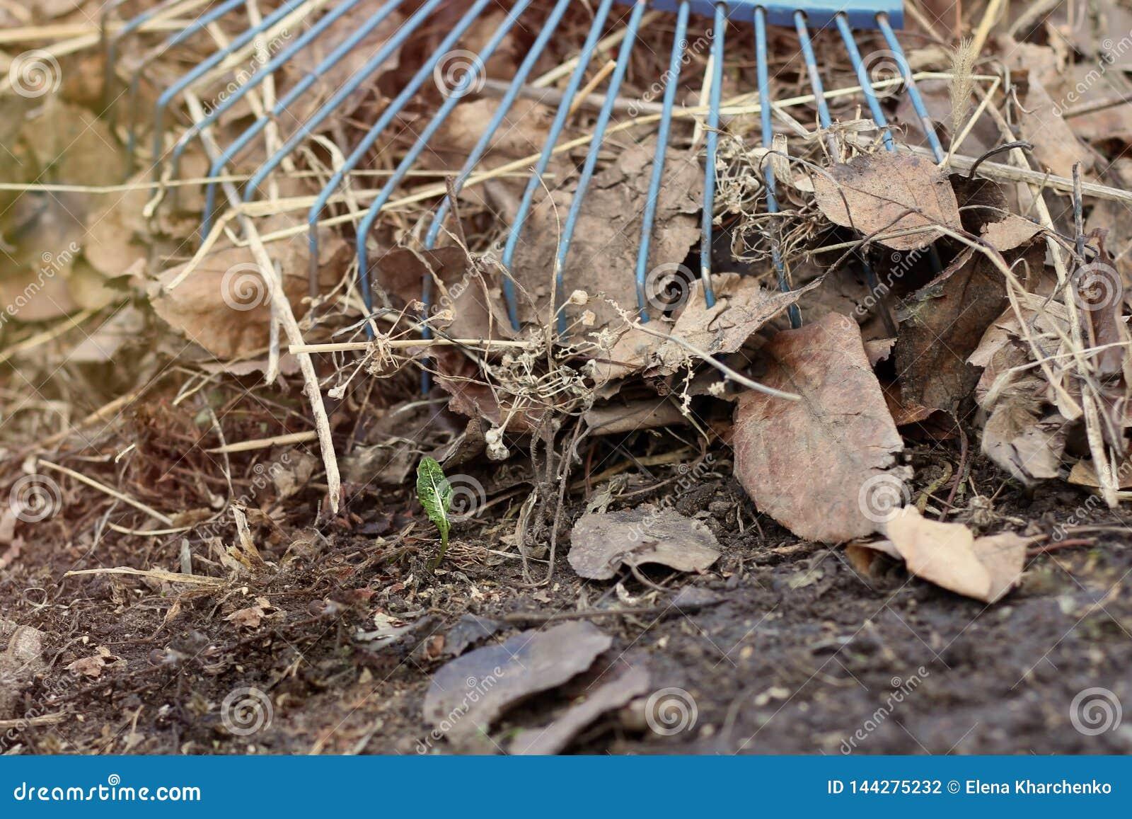 Rührstange auf einem Stapel des neuen Grassprösslings des gelben Herbstlaubs