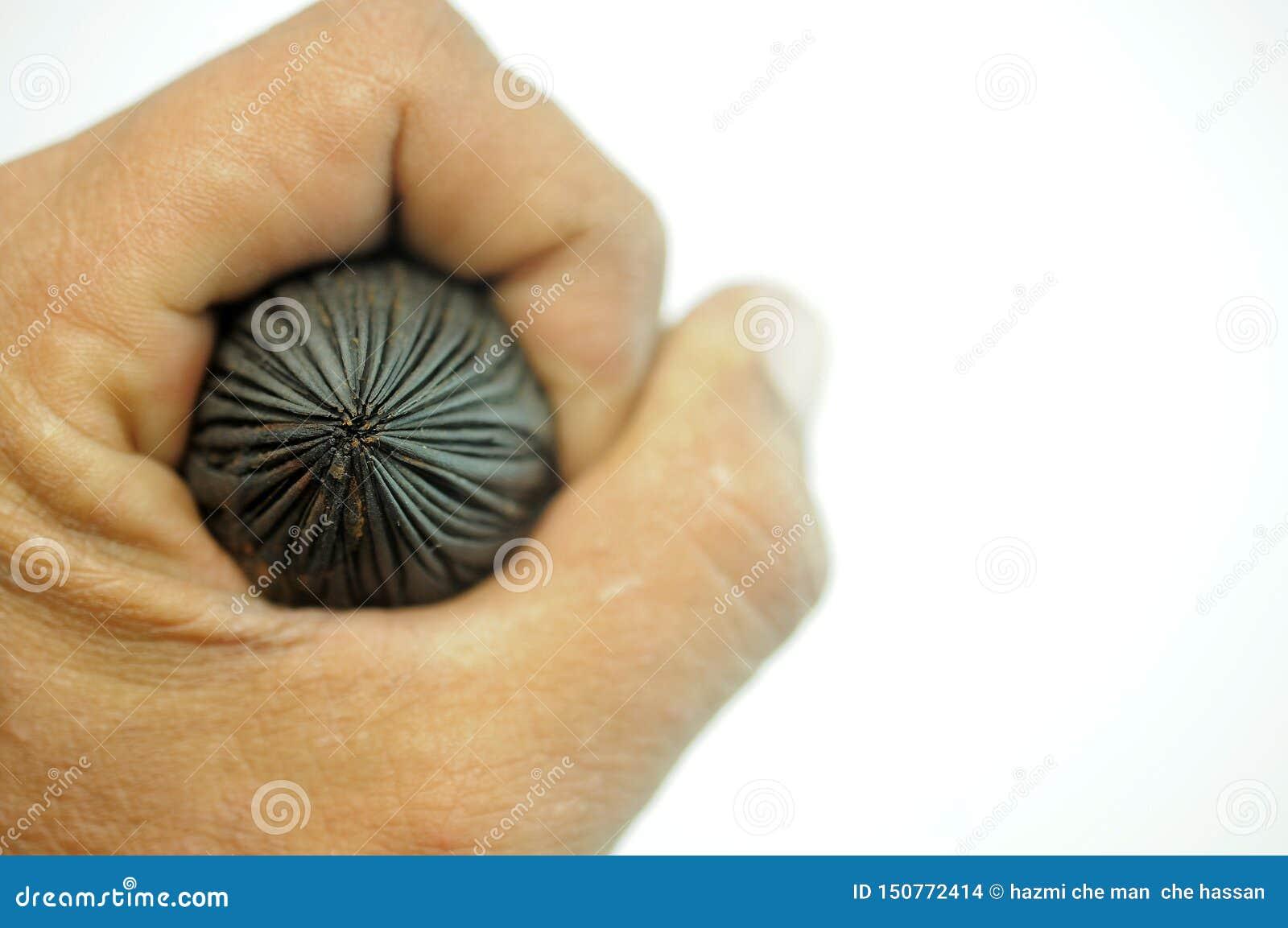 Ręka chwyci palm ziarna na białym tle
