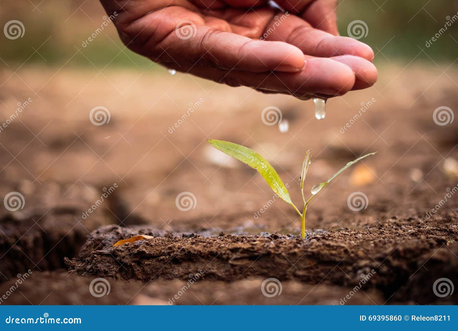 Ręka nawadnia ziemię jałową