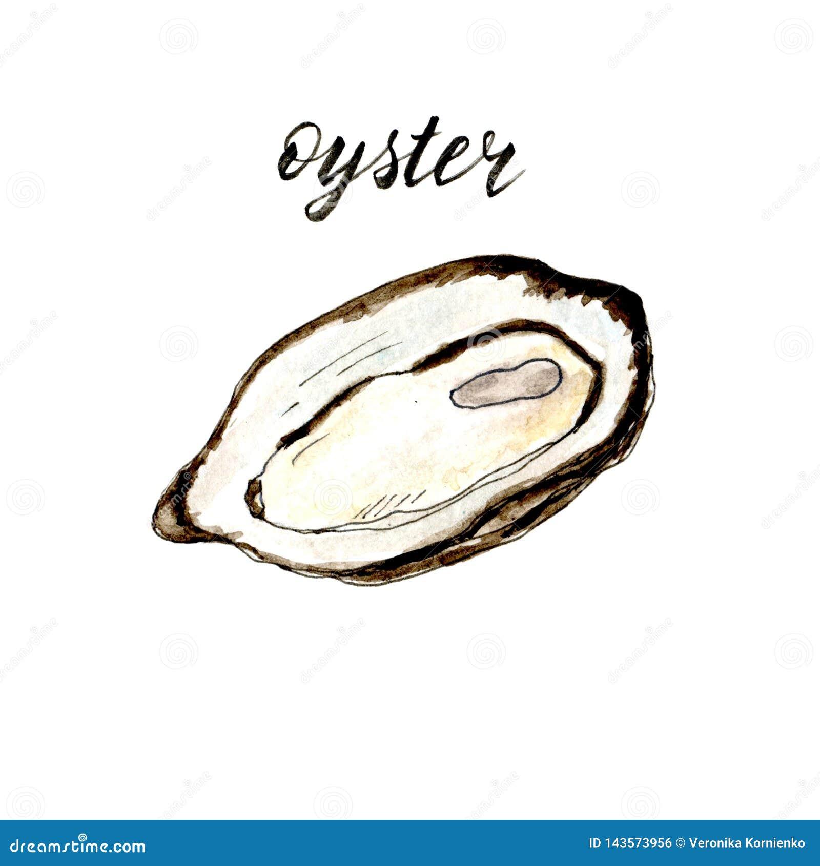 Ręka rysująca akwareli odosobniona ostryga