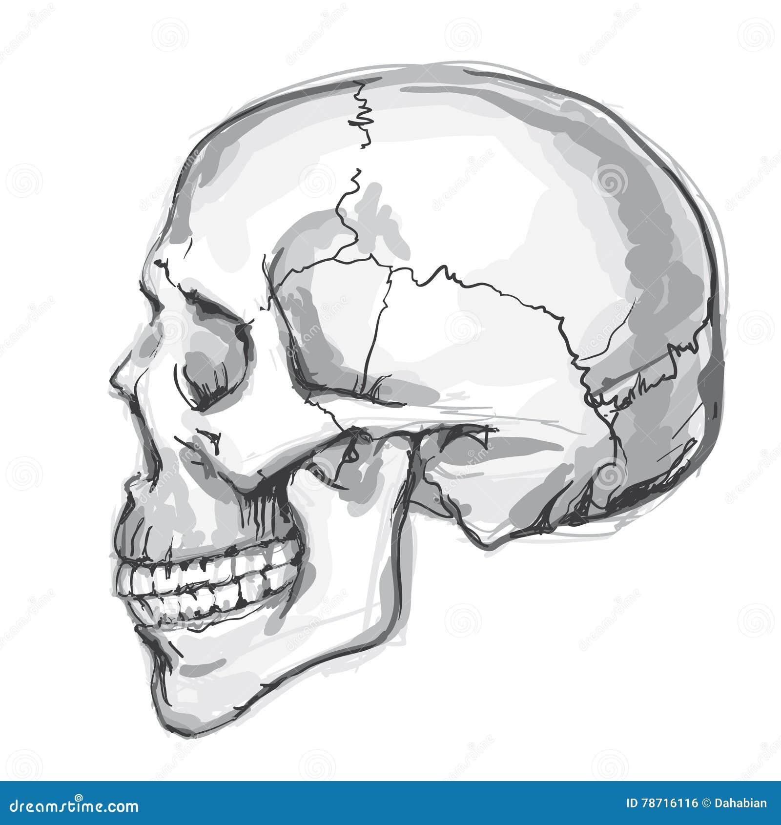 Ręka rysująca ludzka czaszka