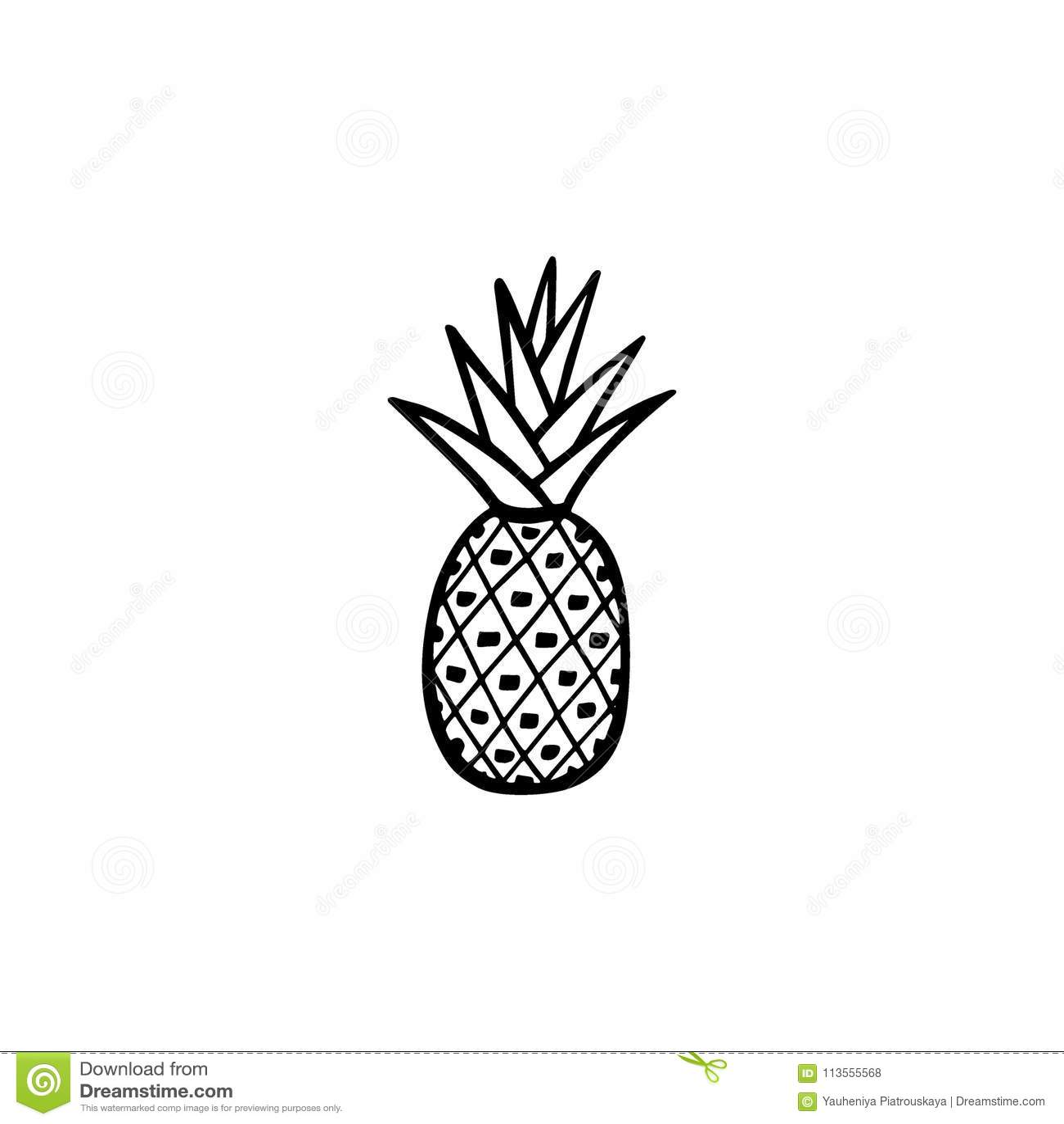 Ananas Rysunek ręka rysujący ananas ilustracja wektor. ilustracja złożonej