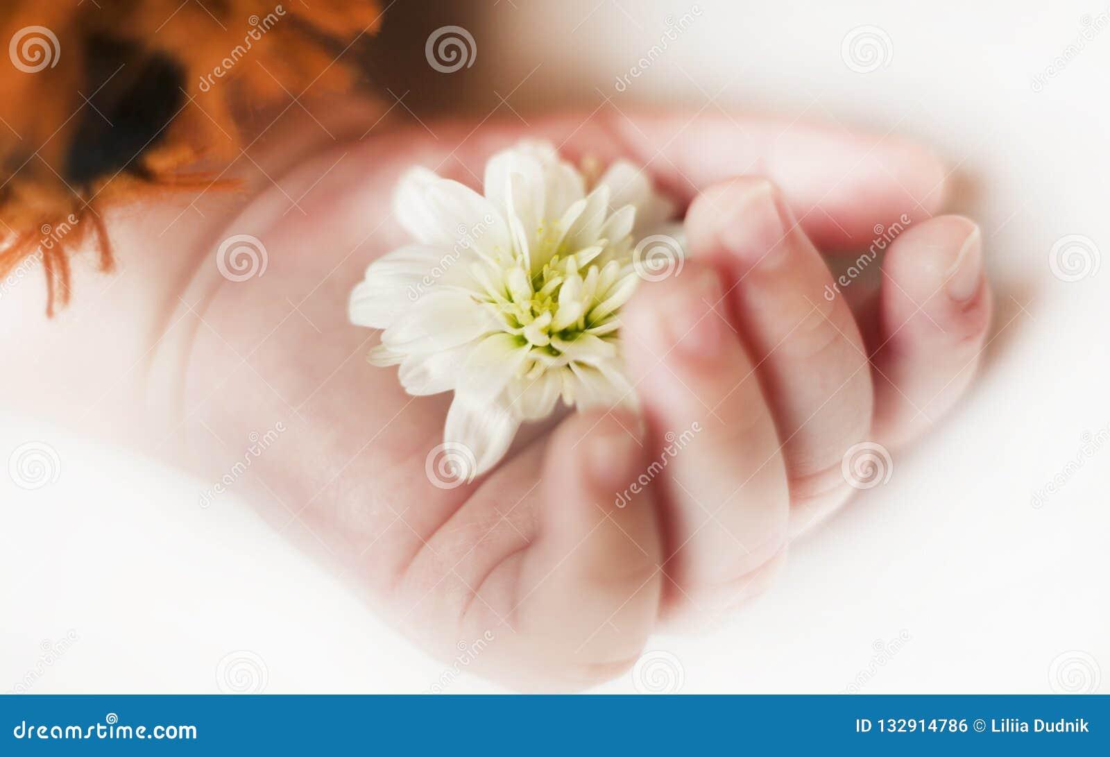 Ręka z kwiatem sypialny nowonarodzony dziecko zamknięty w górę odosobnionego tła