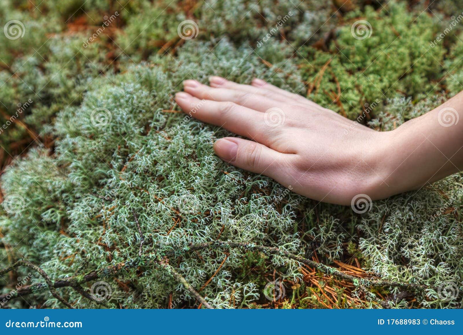 Ręki mech wzruszająca kobieta
