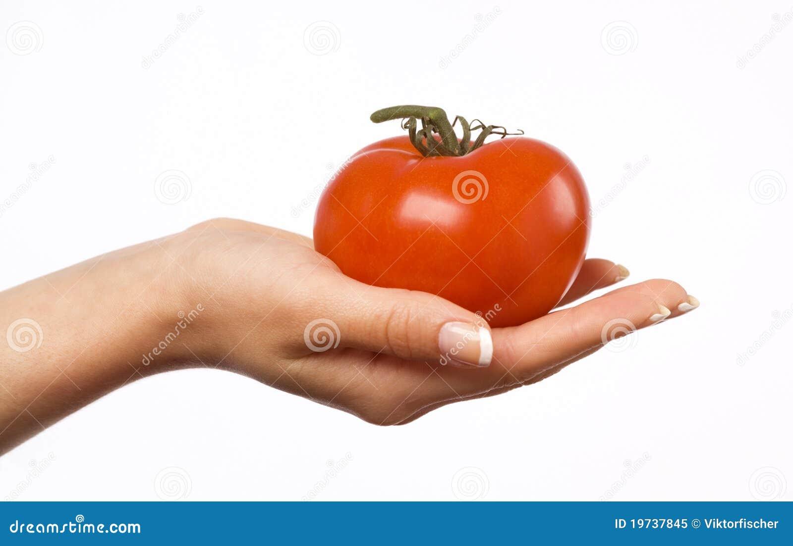 Ręki mienia s pomidoru kobieta