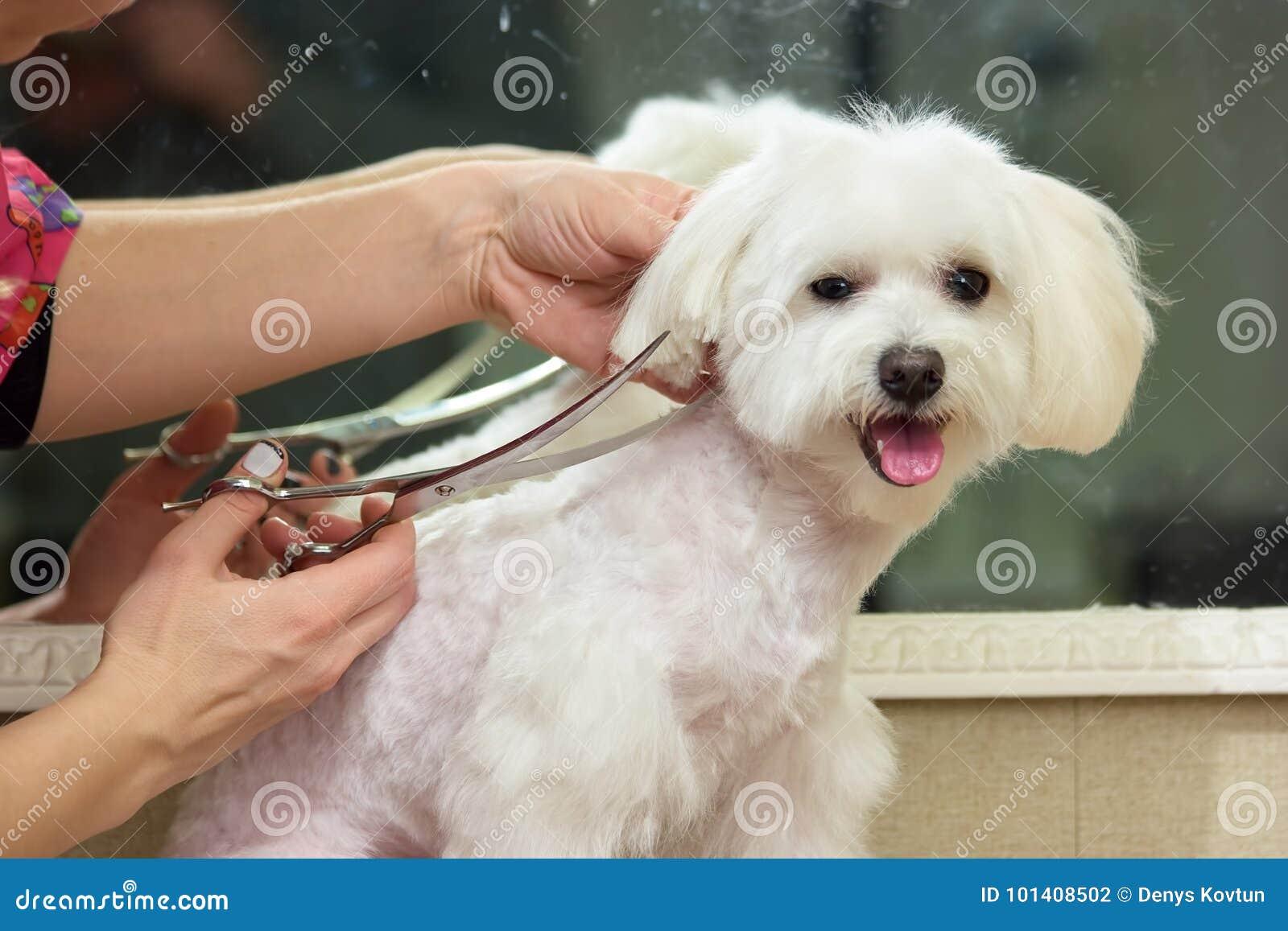 Ręki psi groomer, nożyce