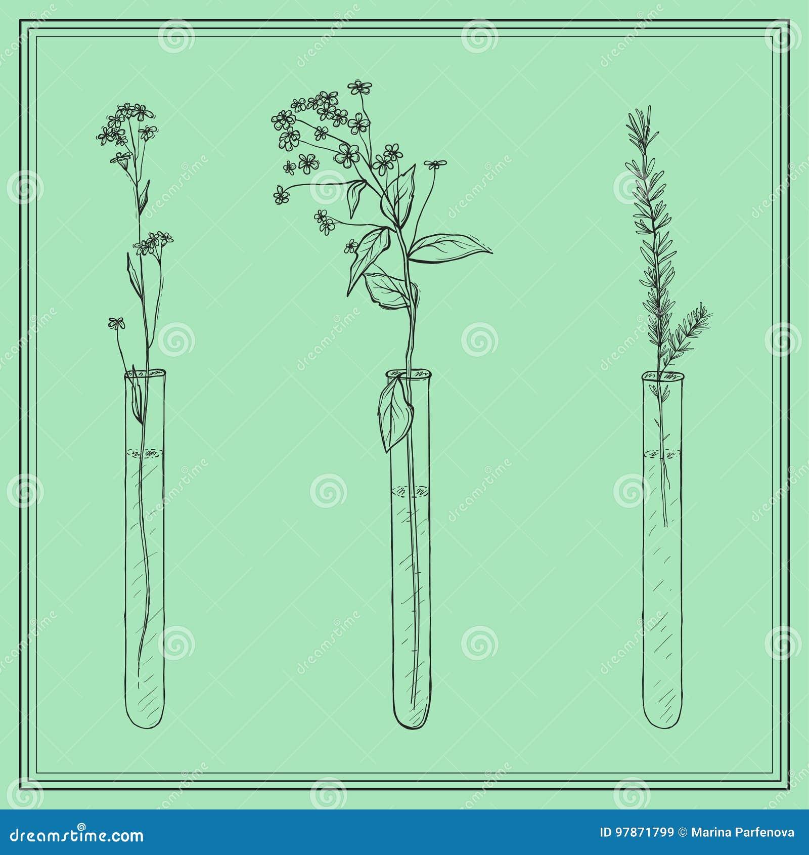 Ręki rysować lawend rośliny, kwiaty w Vitro, buteleczka, w ramie