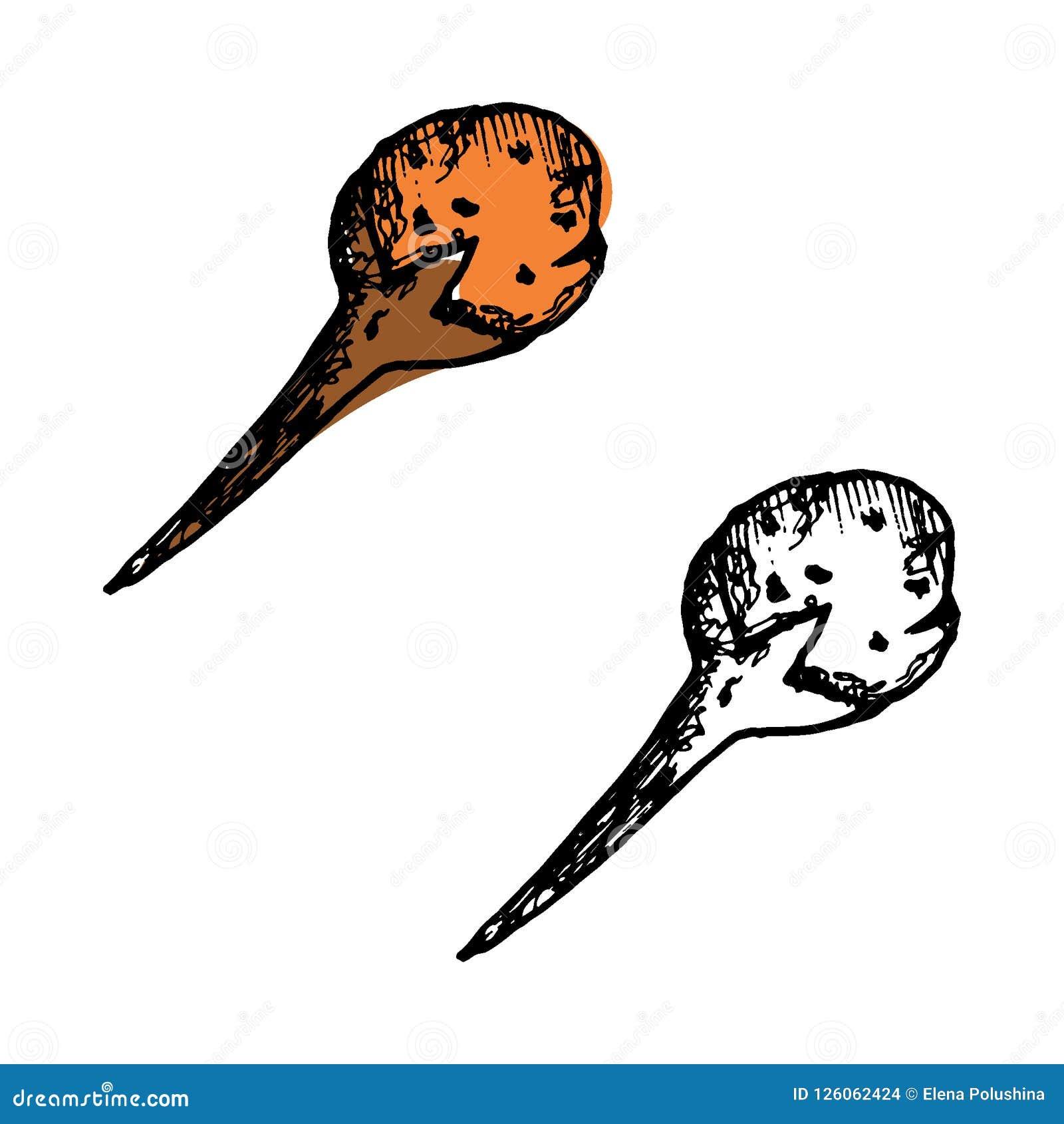 Ręki rysować nakreślenie pikantność ustawiać Podpalany liść, połówka nutmeg, kardamon z ziarnami i cloves, Ziele, condiments i pi
