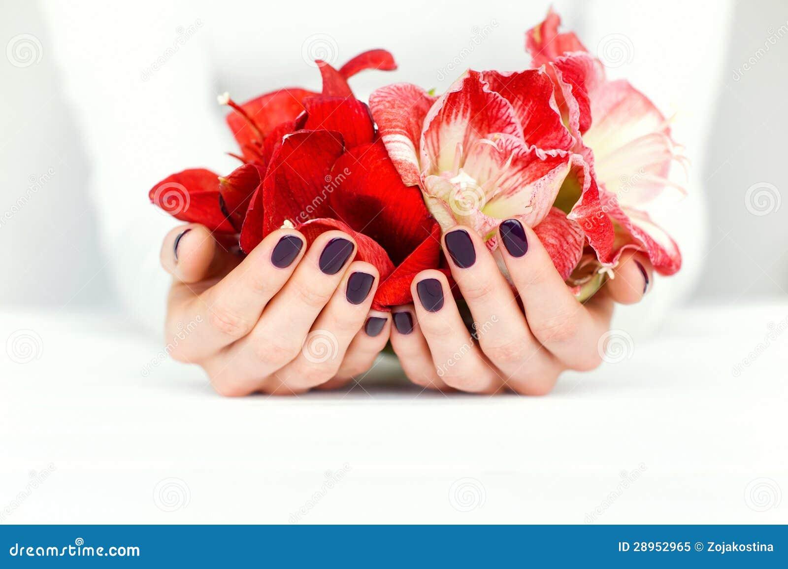 Ręki z pięknym manicure em trzyma jaskrawych kwiaty