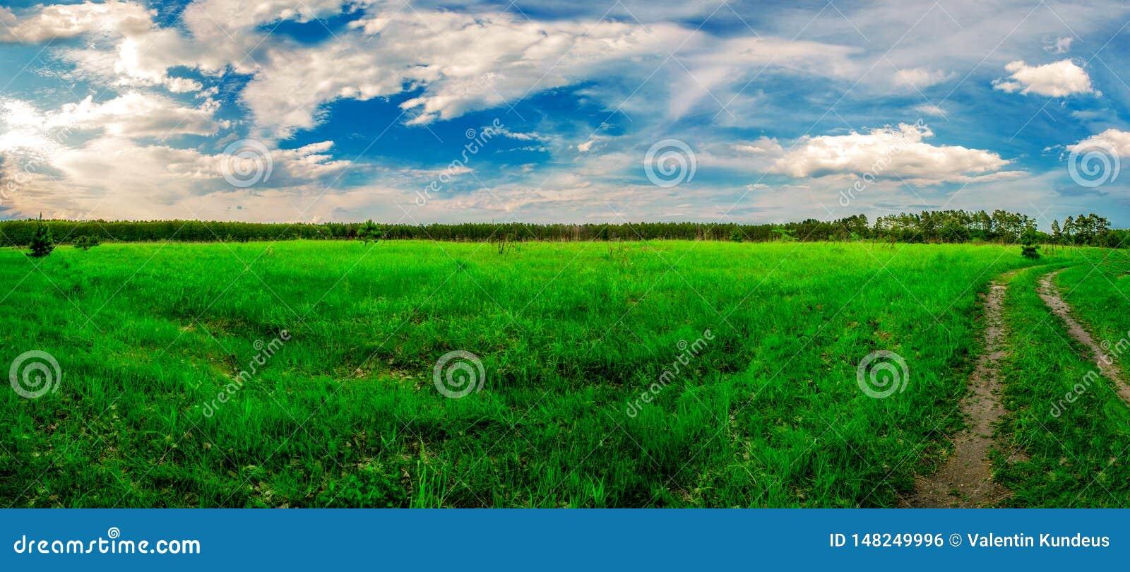R Τομέας, δάσος και ουρανός r Πράσινη juicy χλόη Κωνοφόρο δάσος στον ορίζοντα Σωρείτης στον ουρανό