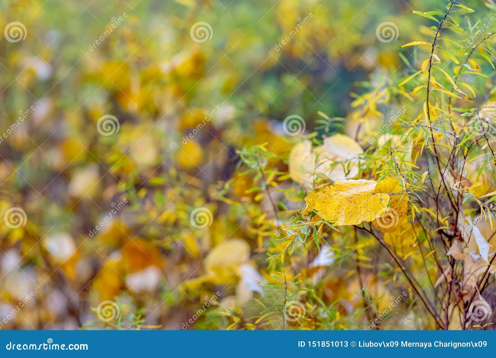 R Кустарники и желтые листья Предпосылка природы красивая запачканная r o r