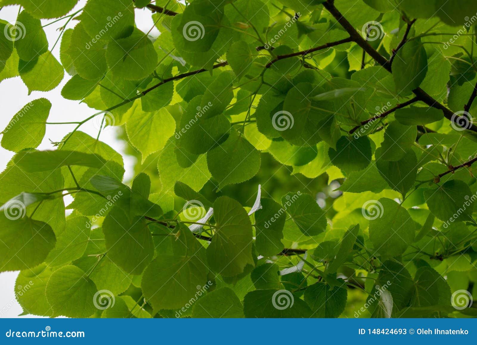 R Предпосылка с зелеными листьями