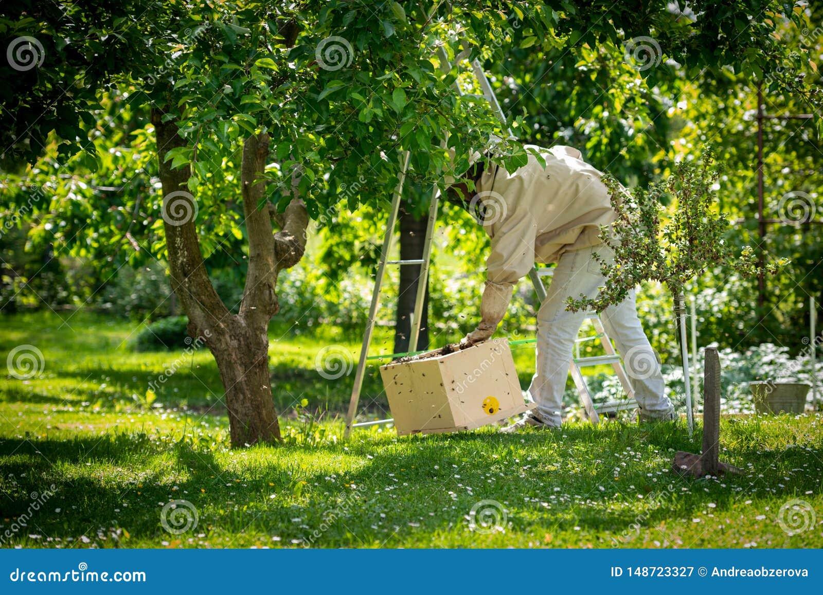 R 收集逃脱的蜂的蜂农从树群集 蜂房背景