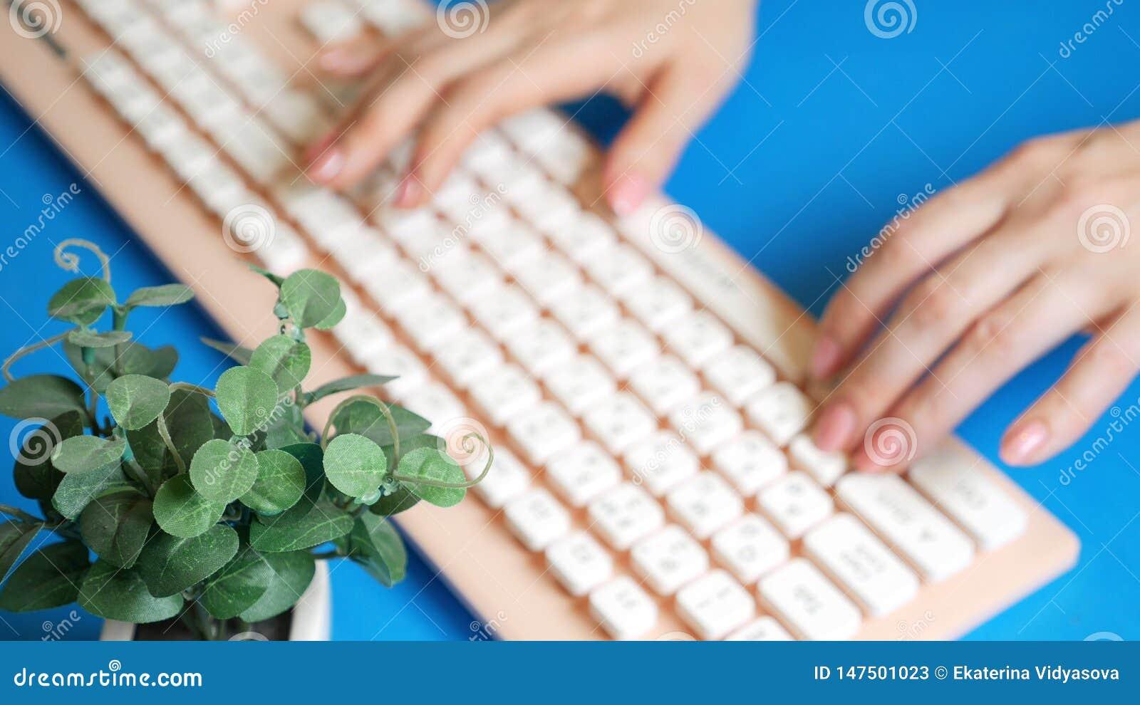R 时髦的招呼的显示卡 女性手在一个桃红色键盘键入,在花旁边 在蓝色