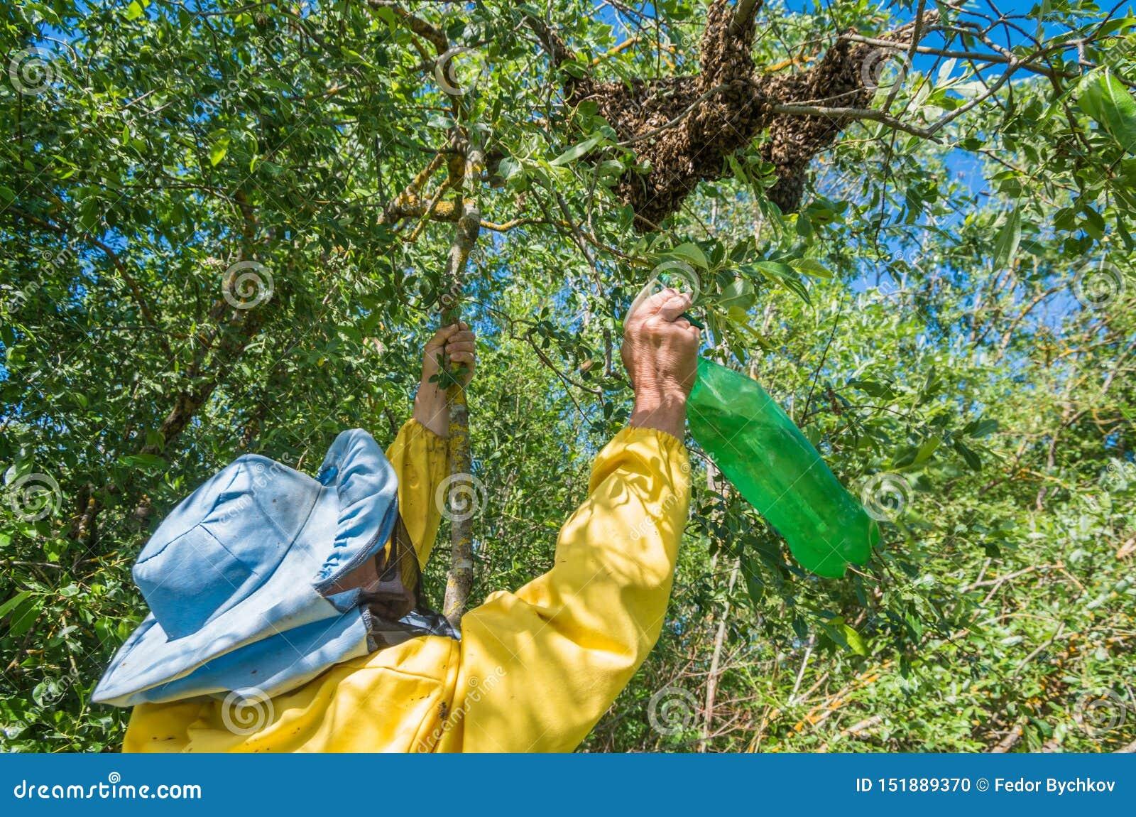 R 逃脱的蜂群集在树的嵌套