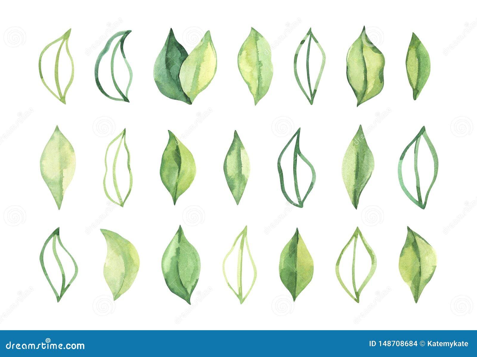 R?ka rysuj?ca akwareli ilustracja Botaniczni wiosna li?cie greenfield elementy kwieci?ci projekt?w Doskonali? dla ?lubnych zapros