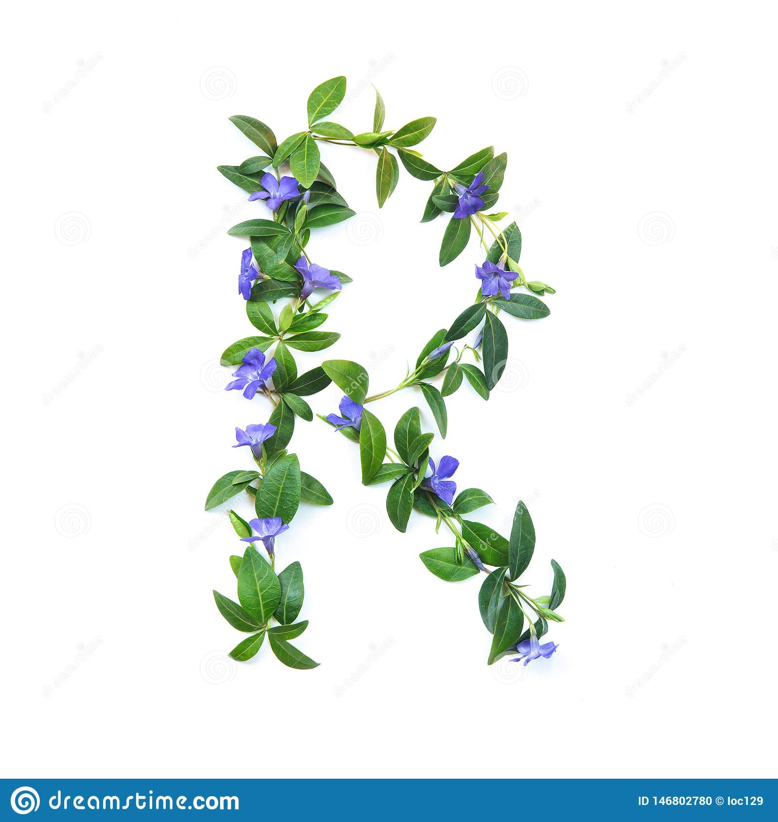 R, letter of the alphabet of flowers isolated on white background. The letter of flowers and leaves of periwinkle. Green and