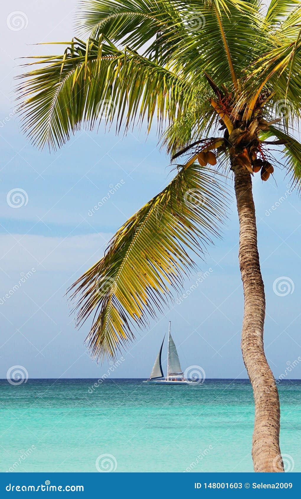 R Tropische oceaan