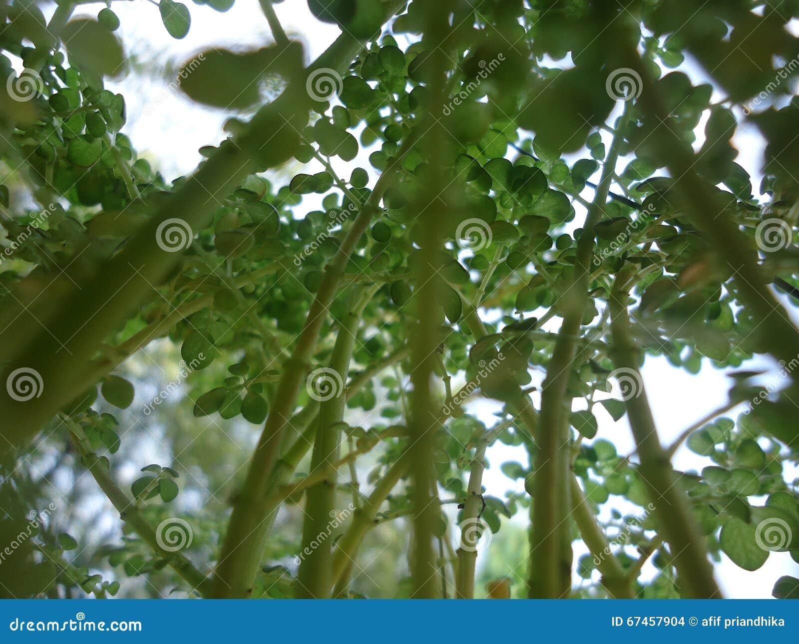 R up mój rośliny