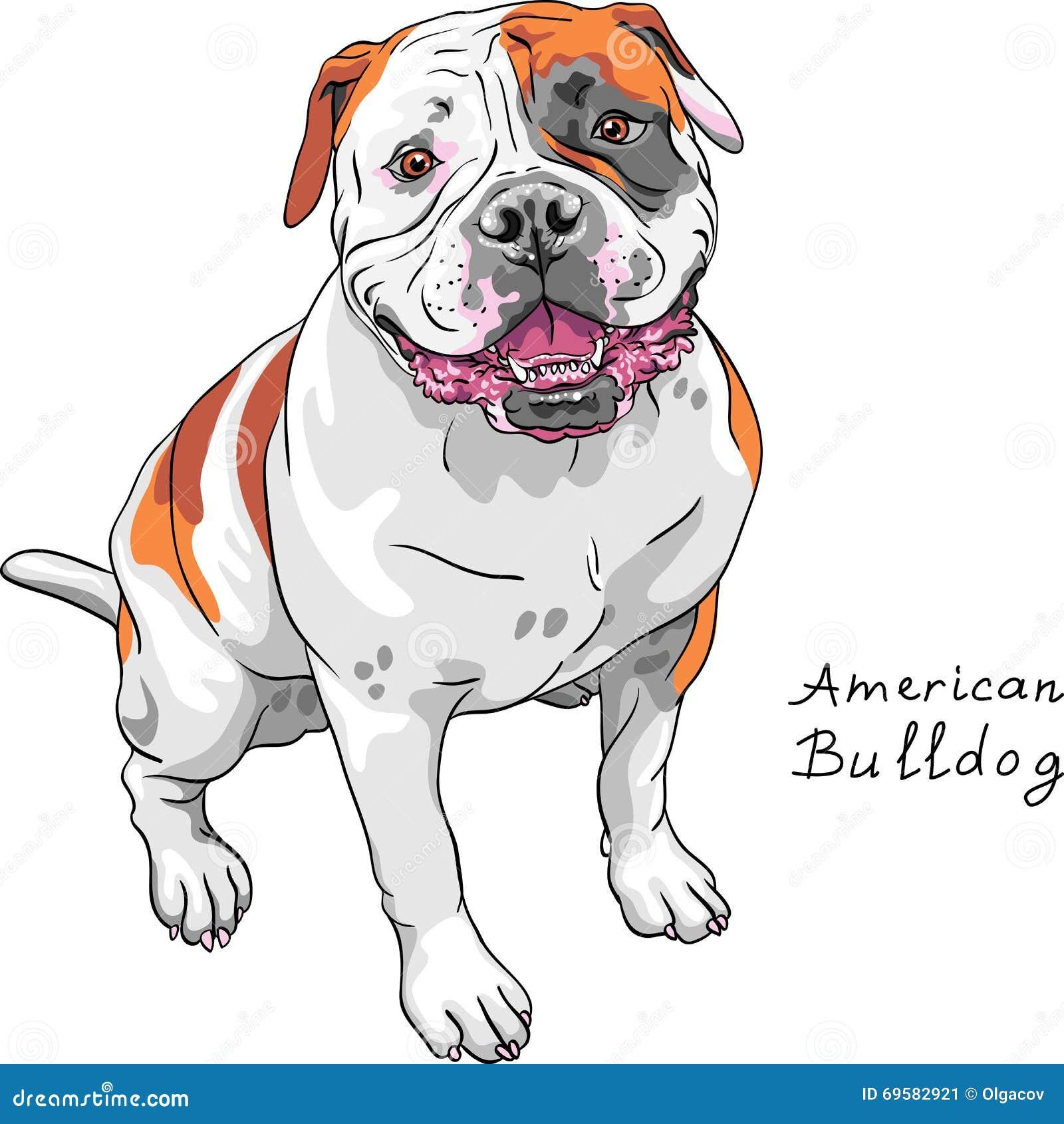 Raça americana do buldogue do cão do esboço do vetor