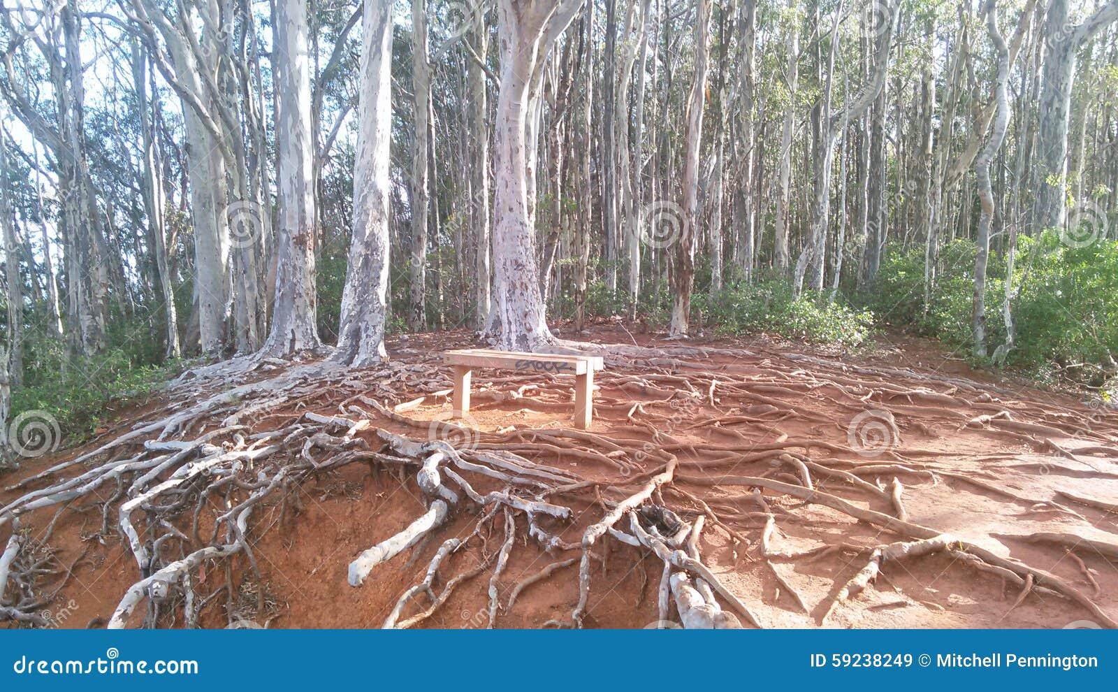 Raíces y árboles de las montañas de Oahu