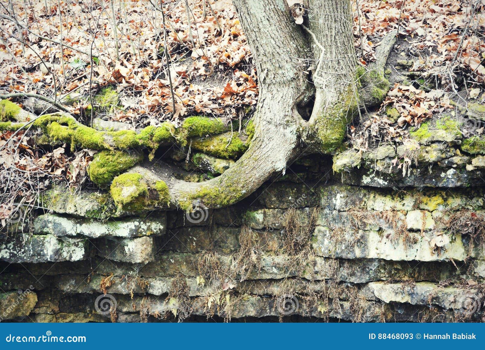 Raíces y rocas del tronco de árbol
