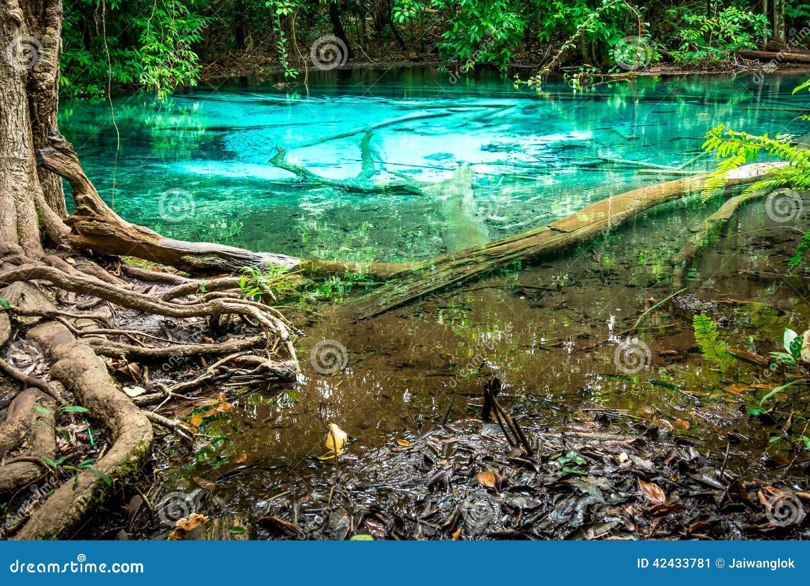 Raíz esmeralda de la piscina y del árbol