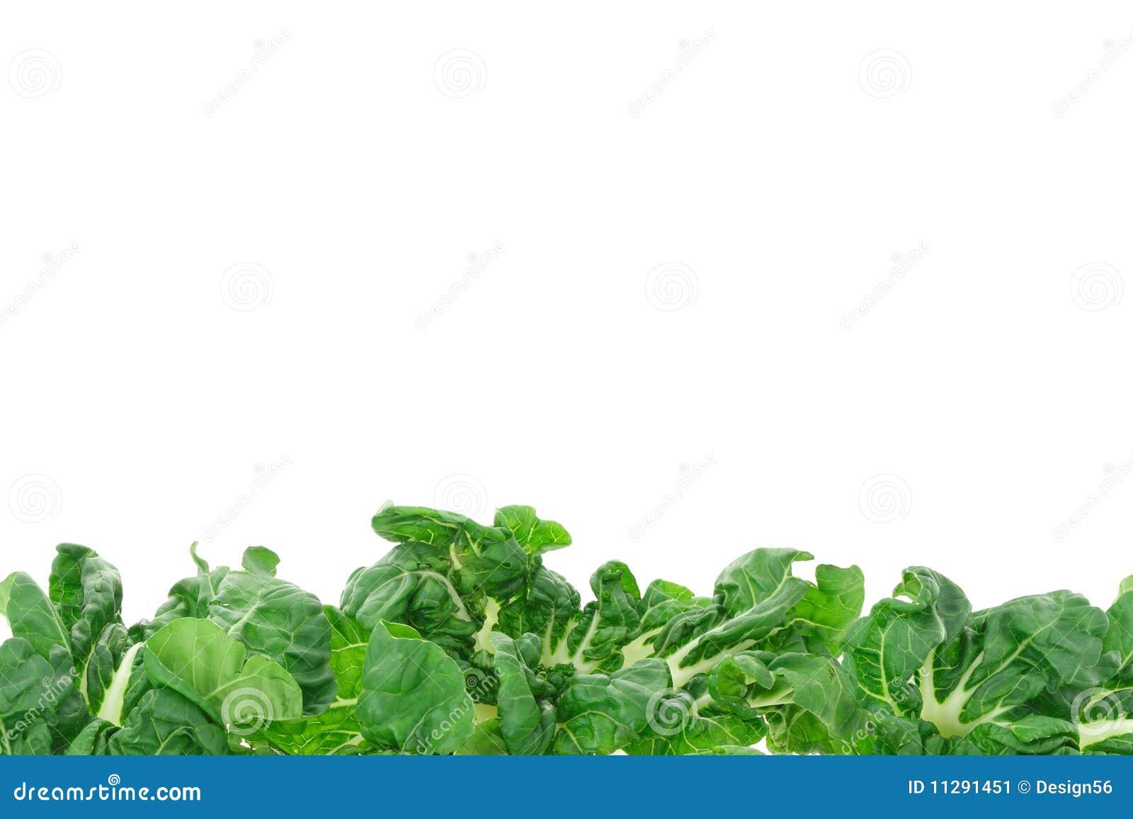 Rabatowy zielony warzywo