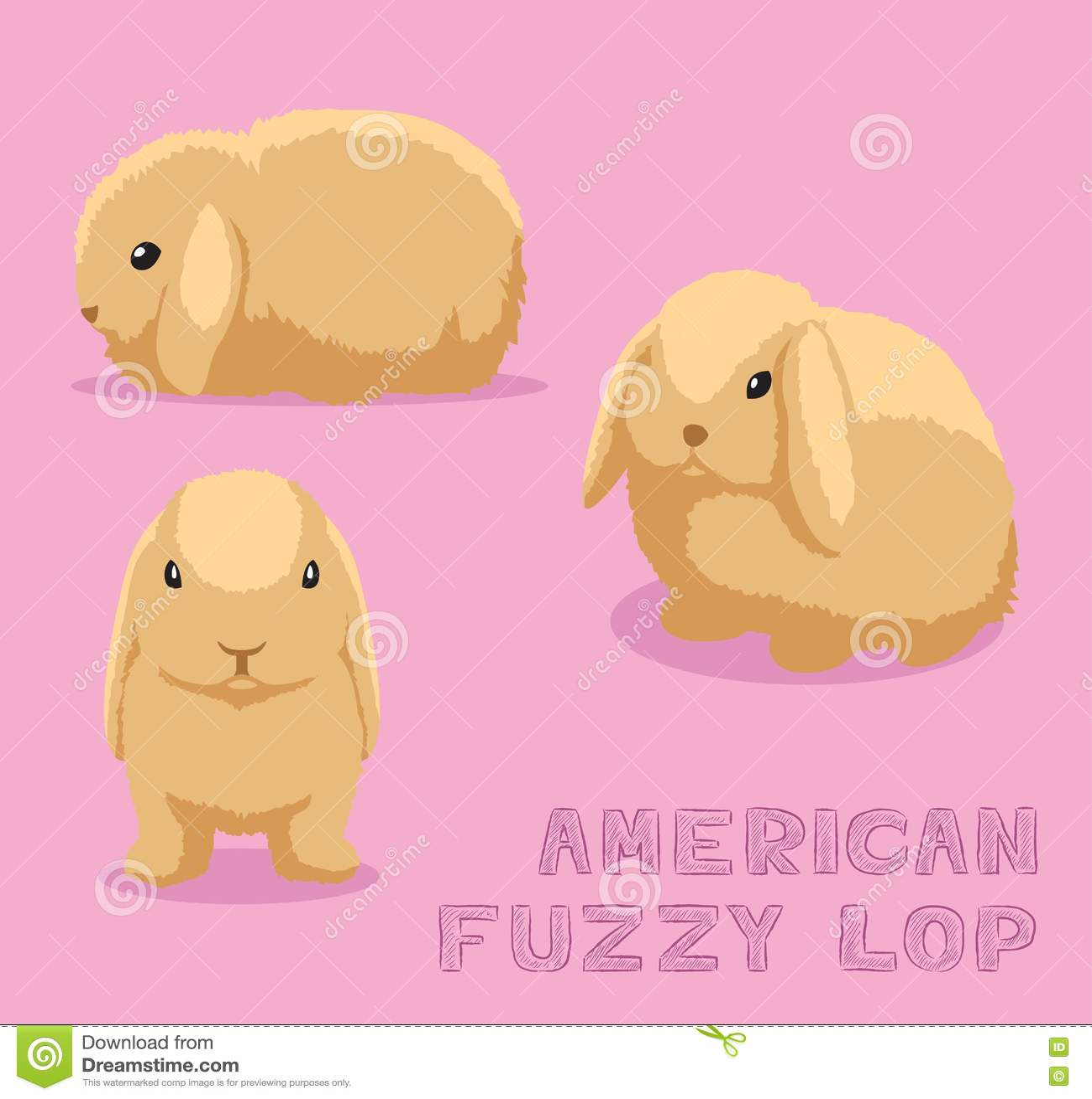 American Fuzzy Lop Rabbit Stock Illustrations 9 American