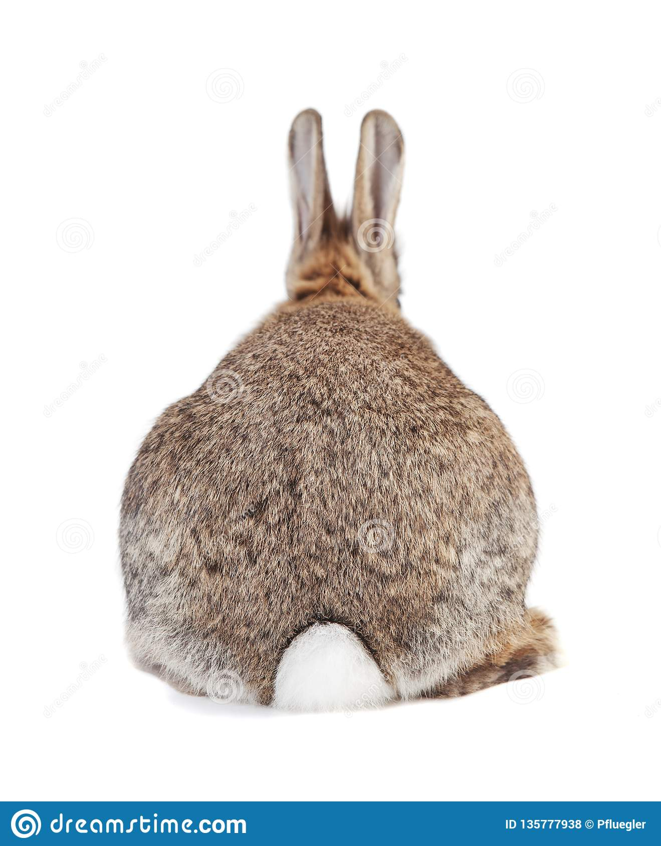 Rabbit from behind