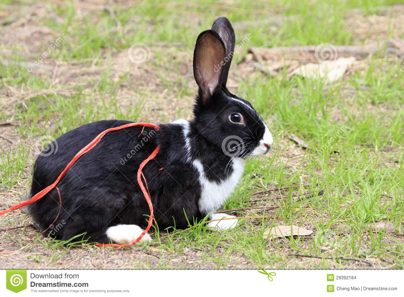 Rabbit Bunny Black And White Stock Images - Image: 29392184