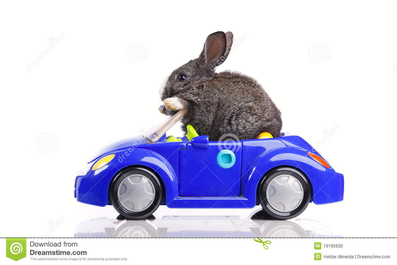 Rabbit Driving A Car Stock Photo - Image: 19195930