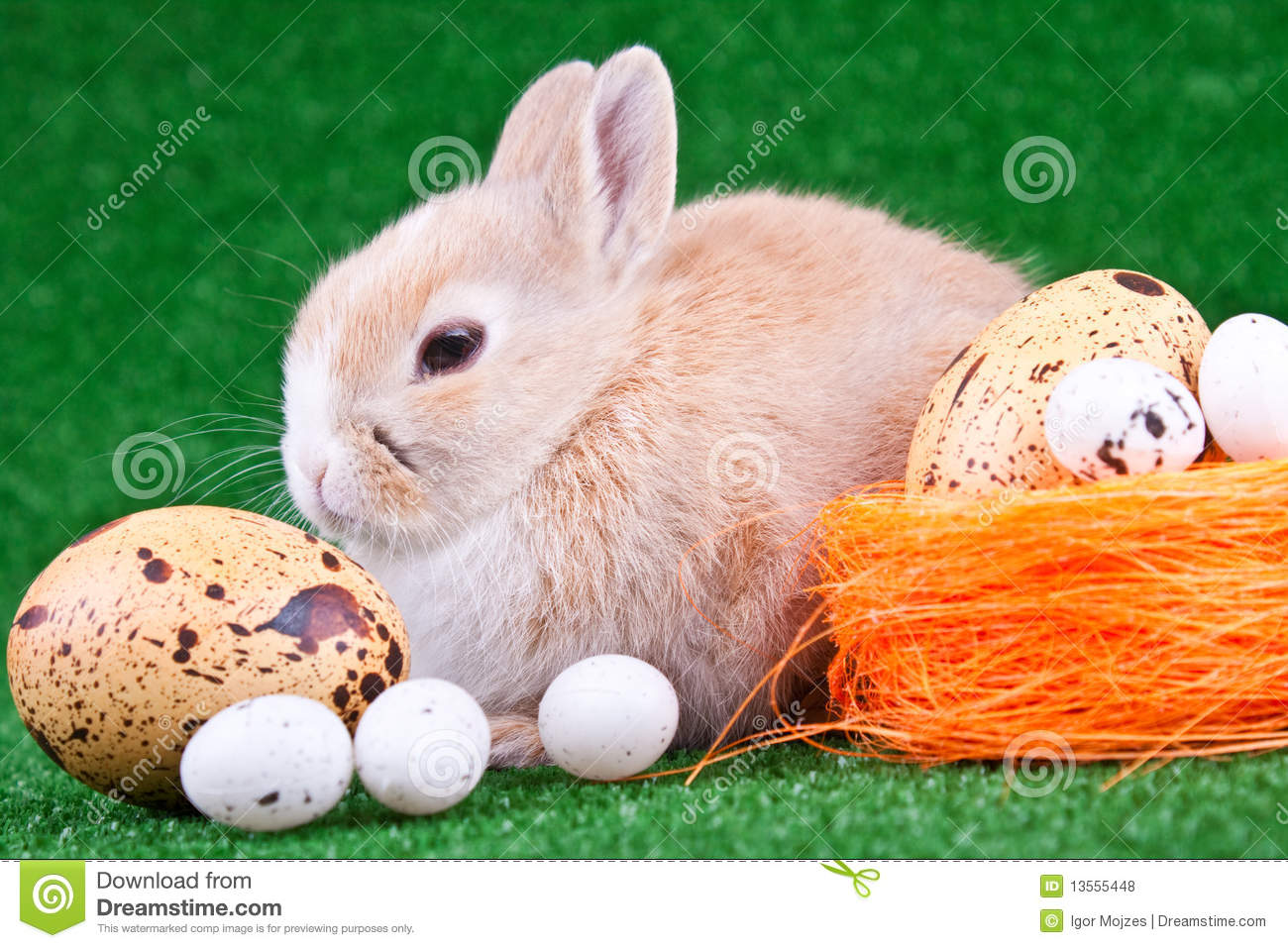 Rabbit and eggs stock photo. Image of garden, eggs, colorful ... for Real Easter Bunny With Eggs  56mzq