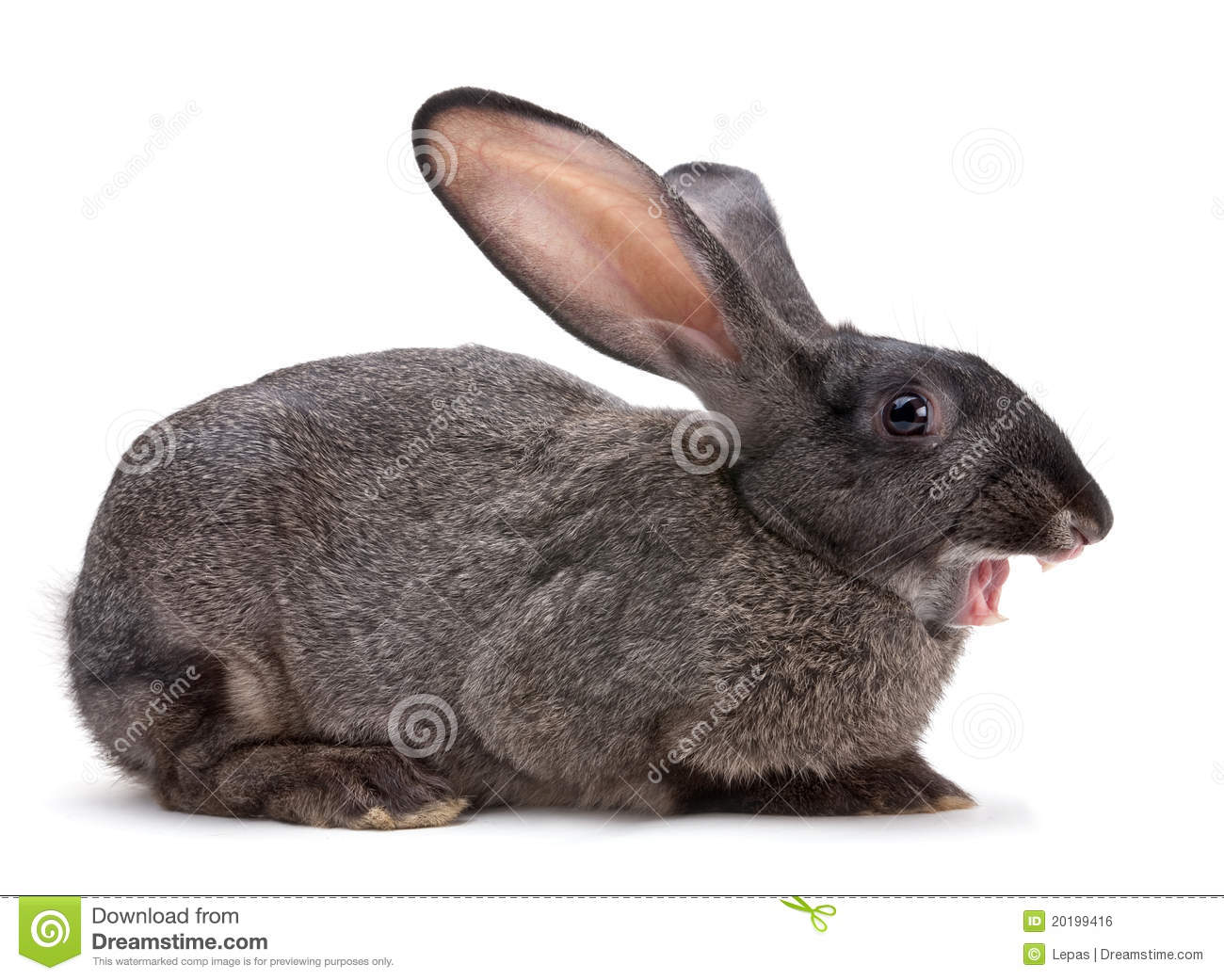 Rabbit Farm Animal Royalty Free Stock Image - Image: 20199416